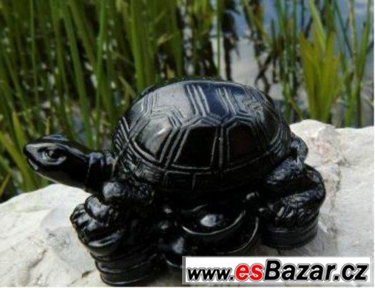 Černá želva severu