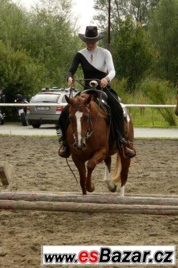 Klisna American Paint Horse