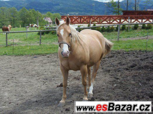 Klisna American Quarter Horse