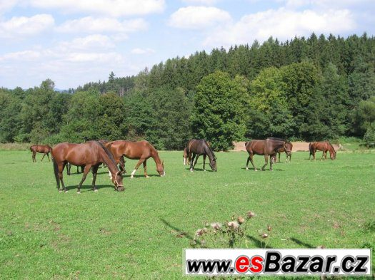 Jízda na koni pro děti i dospělé