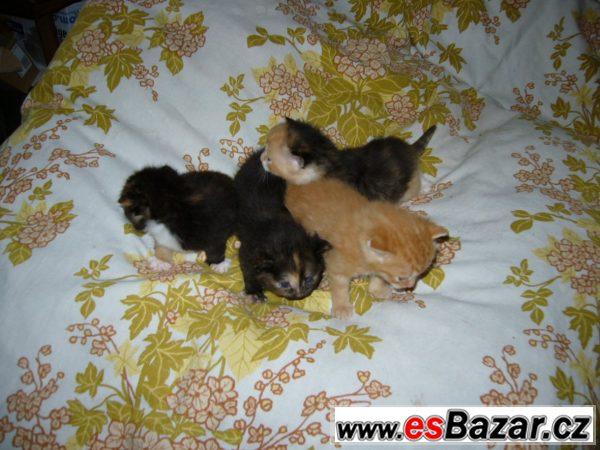 Přenechám 4 roztomilé kočičky