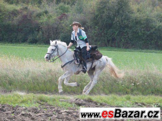 Turistika na koni: vyjížďky, projížďky, dovolená v sedle