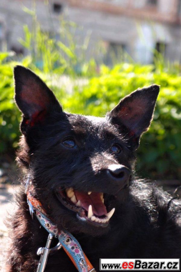 Hledáme domovy pro týrané psy!