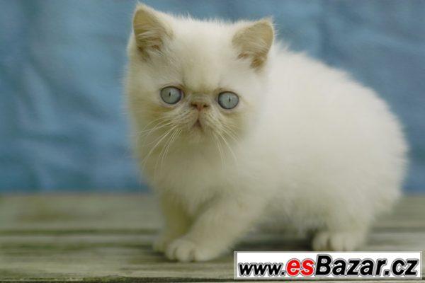 černé ošklivé kočička fotky