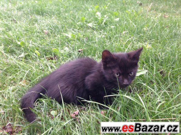 Hravá a tulivá koťátka
