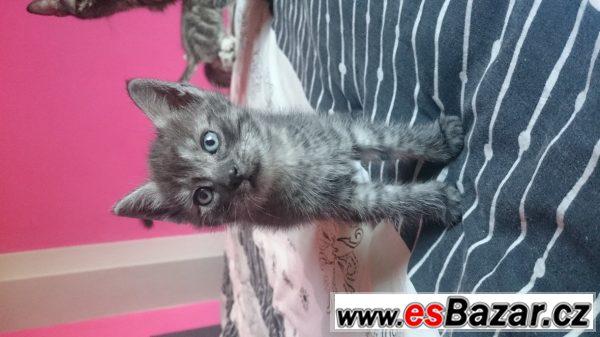 Daruji hravá koťátka