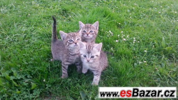 Čtyři vymazlená koťátka