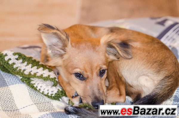 BAMBI - Kříženec malý - štěně