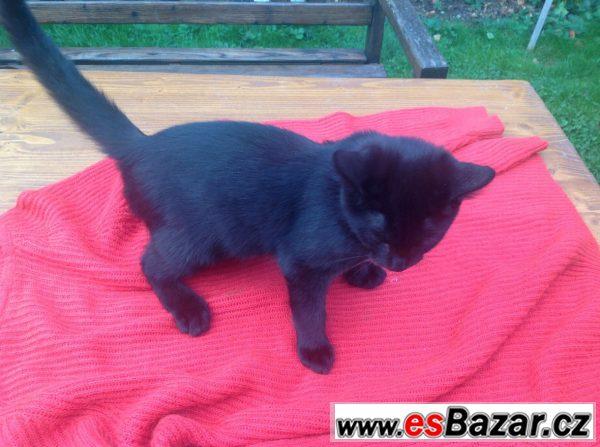 Černý kocourek