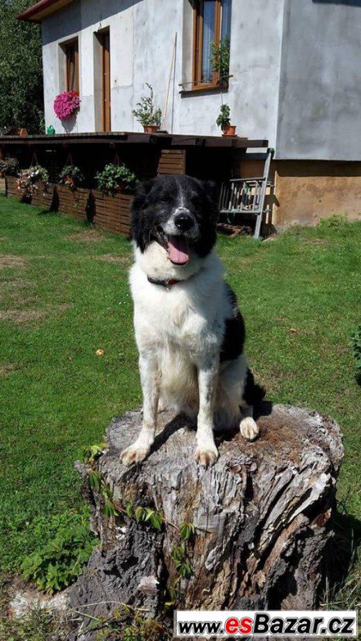 Aron - kříženec - pes