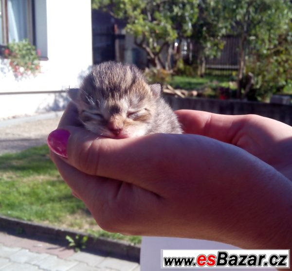 Daruji tři krásné kočičí slečny