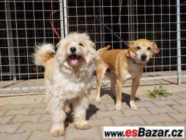 Blesk a Rek - kříženec - pes