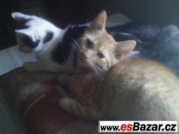 Daruji koťátka kočky a kocourky