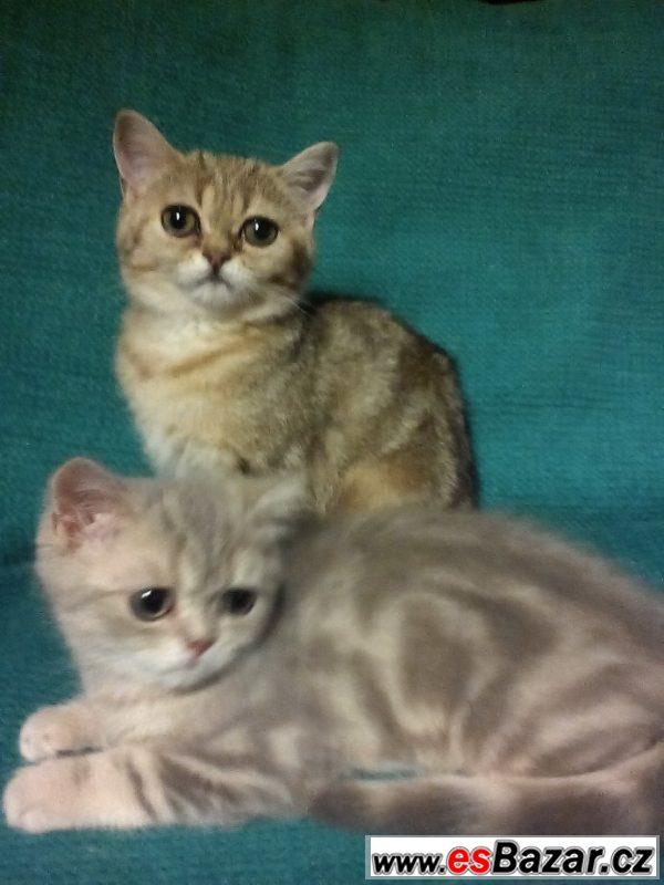 Exotická koťata s PP