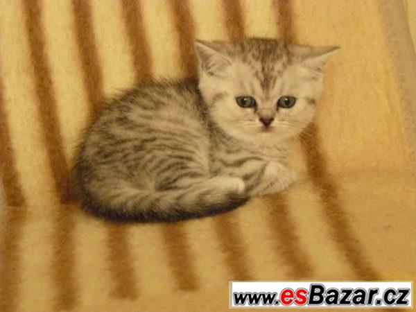 Britská kočička whiskas s PP levně