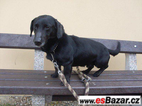 FERDA - Jezevčík - pes