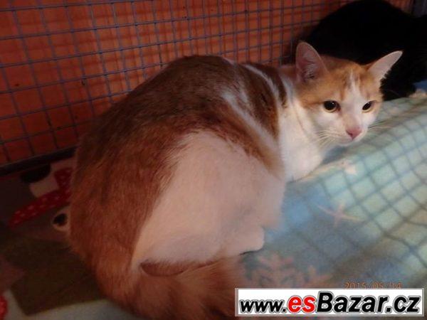 Evropská kočka Šimonek