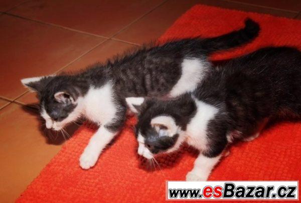 Černobílá koťata