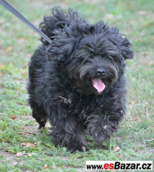 Felix - střapáč - pes