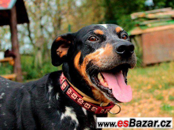 Ben - mladý pes