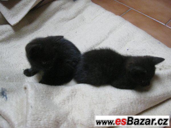 Evropská kočka - potřebují pomoc