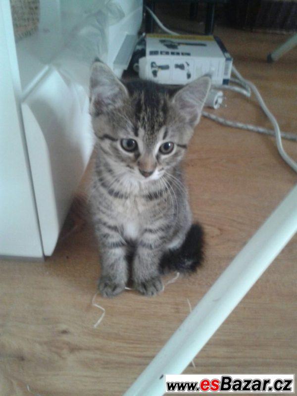 Daruji poslední mourovaté koťátko