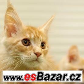 Čistokrevná štěňata a koťata