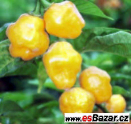 Chilli paprika Trinidad Perfume - semena