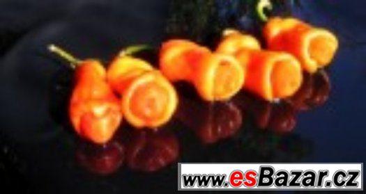 Chilli paprika Pepper Peter Orange - semena