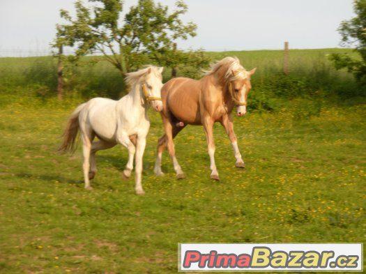 práce , dlouhodobá brigáda u koní -  Kroměřížsko