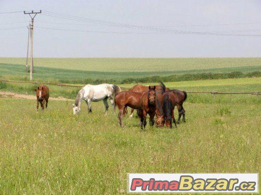 Ustájení s pastvinami kousek od Ostravy