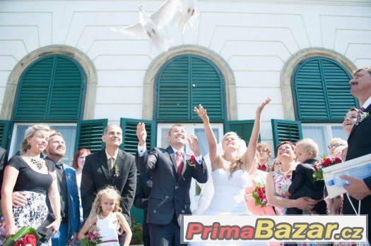 Svatebni holubi