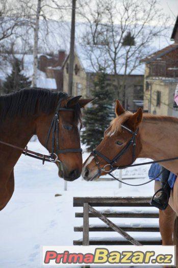 Pronájem s pozdějším odkupem koně po sportovní kariéře