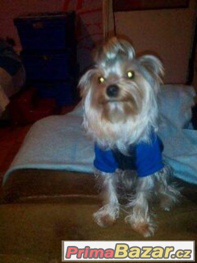 1,5 rocni pes bez pp
