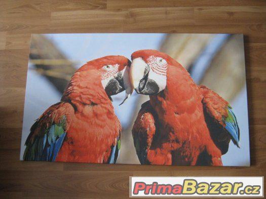 Obraz na plátně papoušci