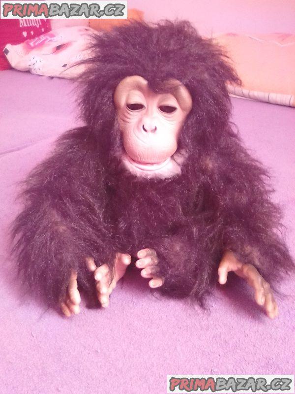 Interaktivní Opice