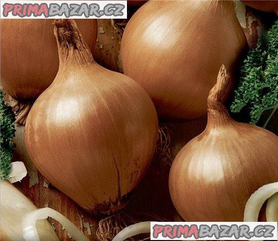 cibule Všetana - semena