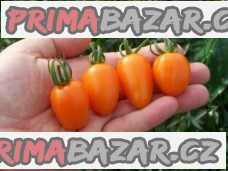 Rajče Santa Orange - semena