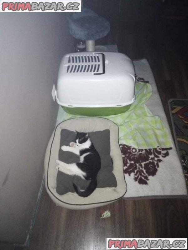 Daruji kotě