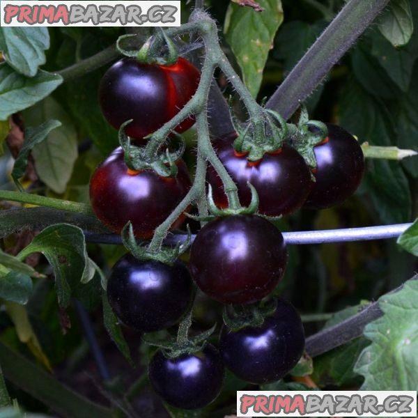 rajče Clackamas Blueberry - semena