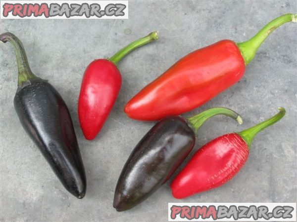 chilli-jalapeno-purple-semena
