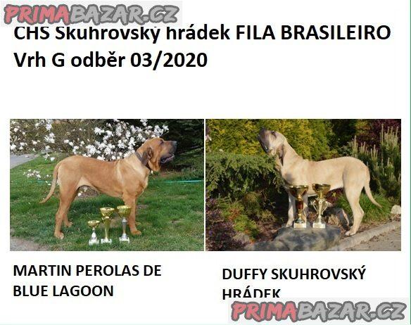 Brazilská Fila, štěňata s PP