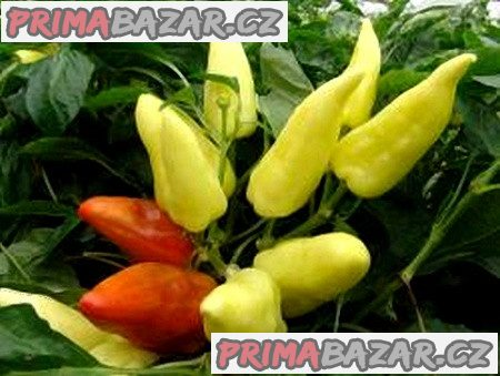 Paprika Anka - semena