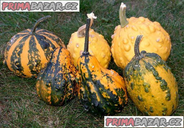 Tykev okrasná z Bradavic - semena