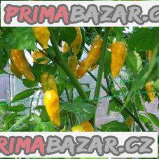 Chilli Fatali yellow - semena