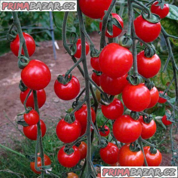 rajče Sweet aperitif - semena