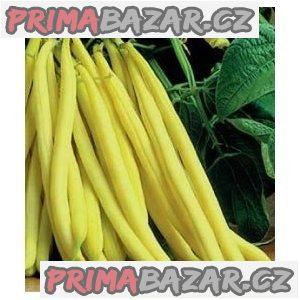 Fazol Berggold  - semena