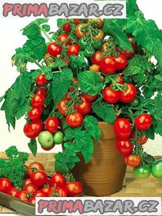 rajče Vilma - semena