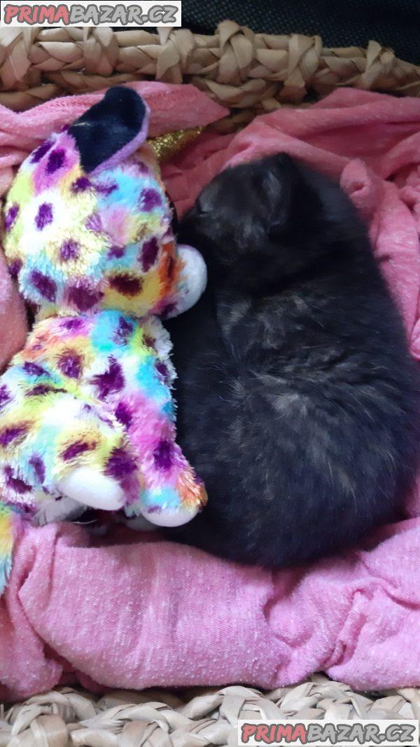 Koťe - kočička